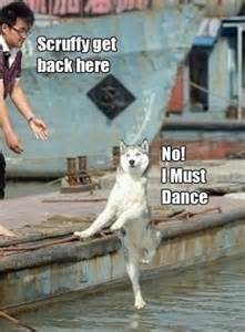 Funny Dance Meme - dog meme collection funny joke pictures
