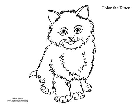 fluffy kitten coloring page kitten fluffy coloring page