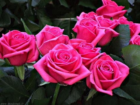 fiore rosa color su il mio mondo in rosa
