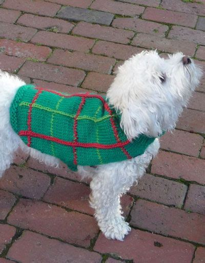 crochet patterns for dog coats free free crochet dog coat pattern here is the free
