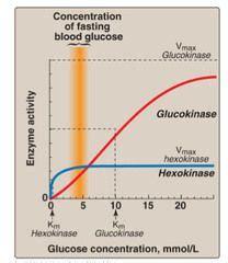 carbohydrates quizlet biochemistry biochem lec 25 26 carbohydrates glycolysis flashcards