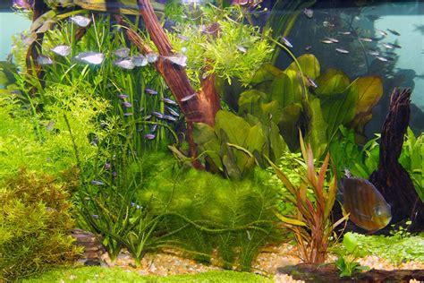 led lights for aquarium plants live plants and lighting in aquariums
