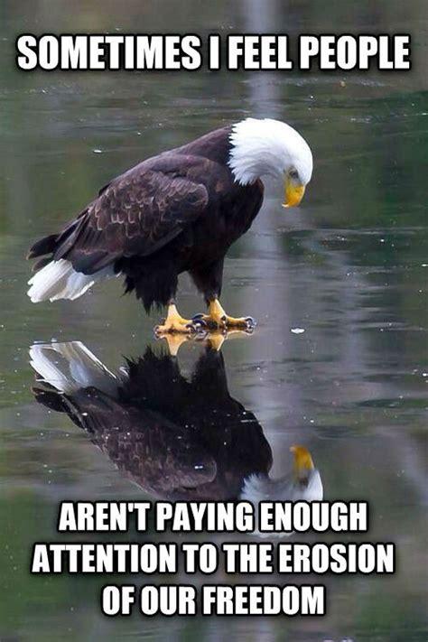 Freedom Eagle Meme - pics for gt freedom eagle meme