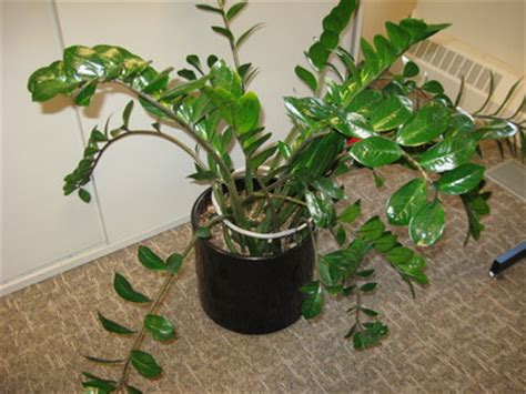 kind  plant   grows