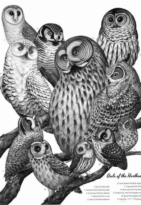 Pin van Mariette Wings op Dieren kleurplaten 2 - Owl