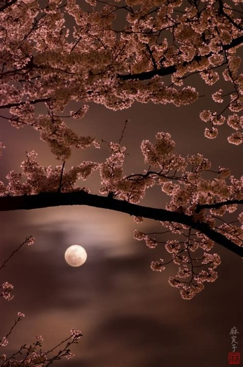 Cherry Blossom Goodness by 444 Best Goodmorning Evening Days Images On