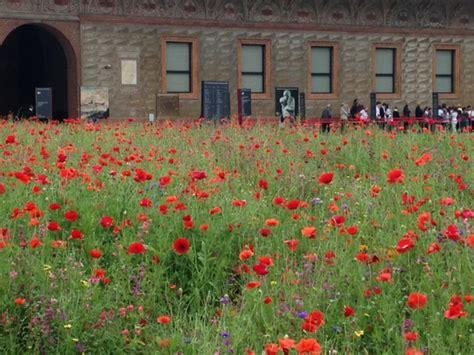 foto prati fioriti prati fioriti giardini in viaggio