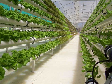 Hydroponic Garden Plans Images Hydroponic Vegetable Gardening