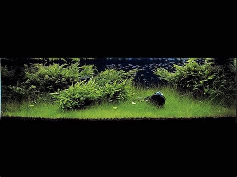 ada aquascape aquatic aquascaping aquarium