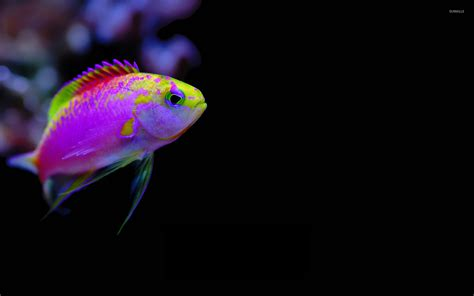 colorful wallpaper animal colorful tropical fish wallpaper animal wallpapers 16163