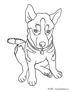 coloriages husky chien des neiges fr hellokids