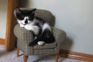Big Comfy Armchairs My Friends Cat In Her Little Cat Chair Imgur