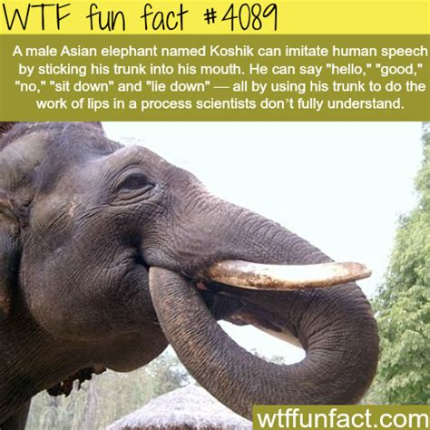 8 Facts On Elephants by The 25 Best Asian Elephant Facts Ideas On
