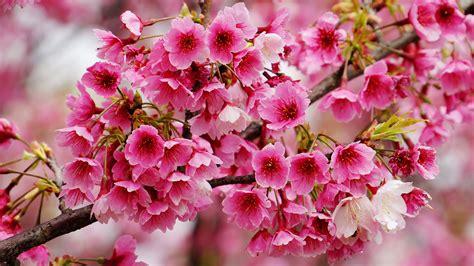 wallpaper bunga iphone nature wallpaper bunga bunga brown palevioletred