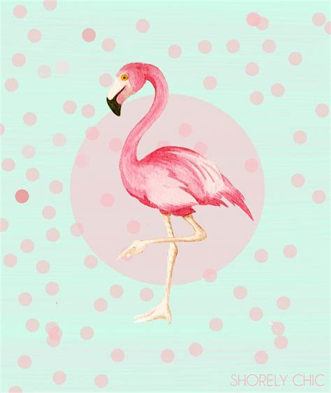 flamingo wallpaper pinterest cute flamingos to come up with a cute new flamingo