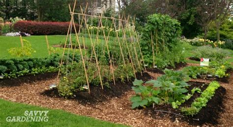 vegetable gardening tips   food gardener