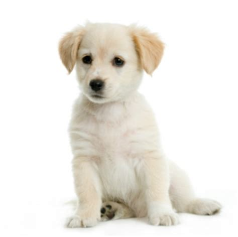 buy a puppy choosing a part one adopt or buy daily