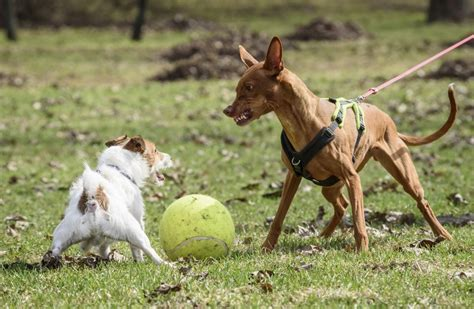 what to do with an aggressive what to do with an overly aggressive canine