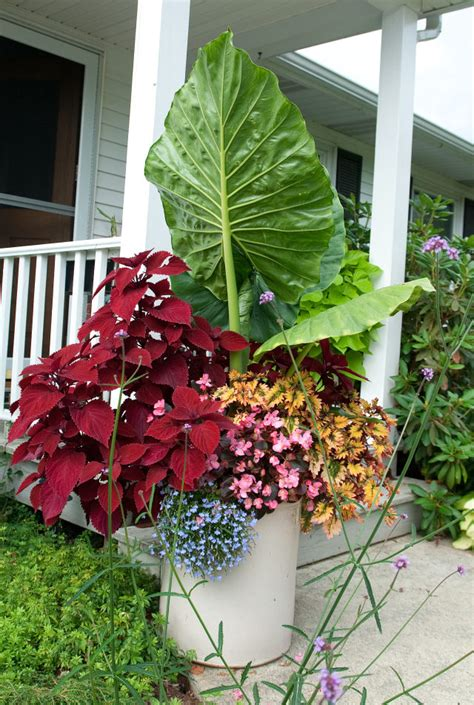 Planting Flower Pots Thriller Spiller Filler Container Flower Container Gardening