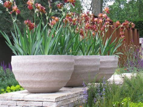 vasi con piante vaso fiori piante da terrazzo vaso di fiori