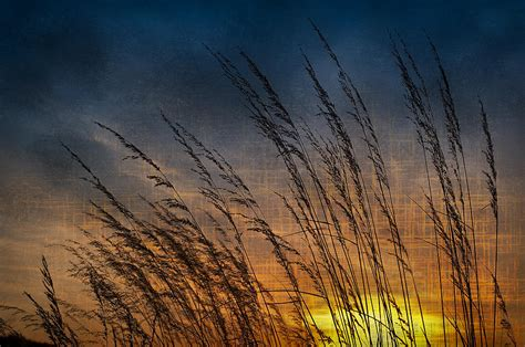 illinois prairie sunset prairie grass sunset patterns photograph by steve gadomski