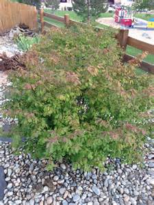 identification are these bushes sun damaged gardening