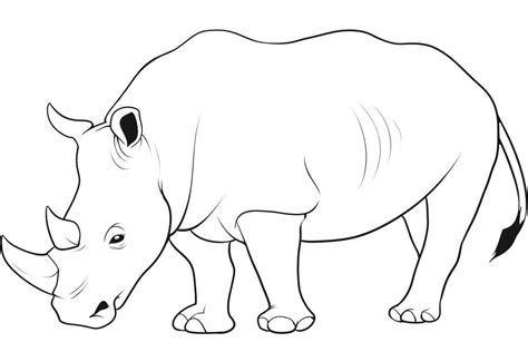 wild animals coloring pages preschool wild animal drawing real nice coloring pages for kids