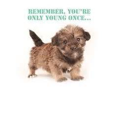 fluffy puppy remember you re only once birthday card co uk kitchen home