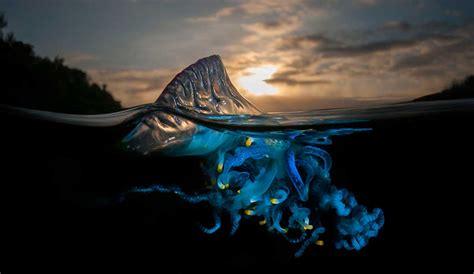 un mundo asombroso estas im 225 genes revelan un asombroso mundo paralelo que se esconde bajo la superficie del agua