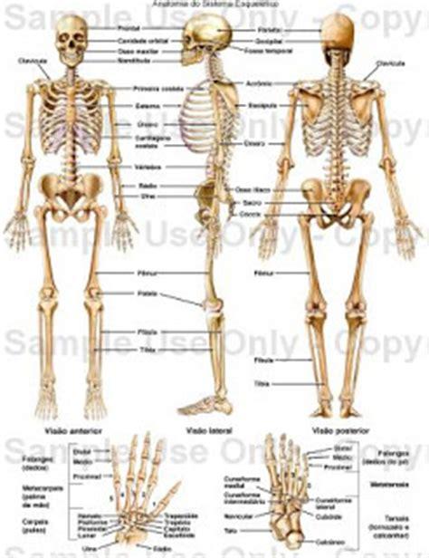 pelvis esqueleto humano frente cibertareas sistema esquel 201 tico humano dicas gr 225 tis 2016
