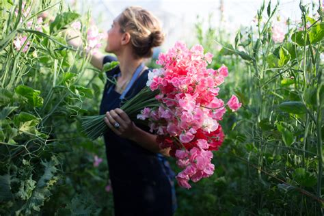 How To Grow Sweet Peas Floret Flowers How To Grow A Flower Garden