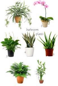 bathroom plant express o winter home bathroom plants