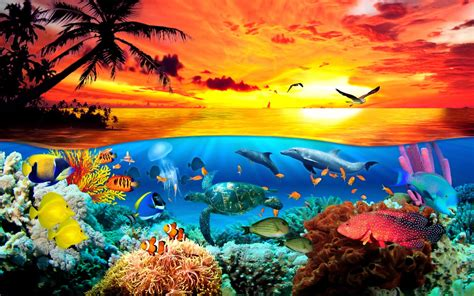 free wallpaper under the sea under the sea animals world wallpaper dreamlovewallpapers