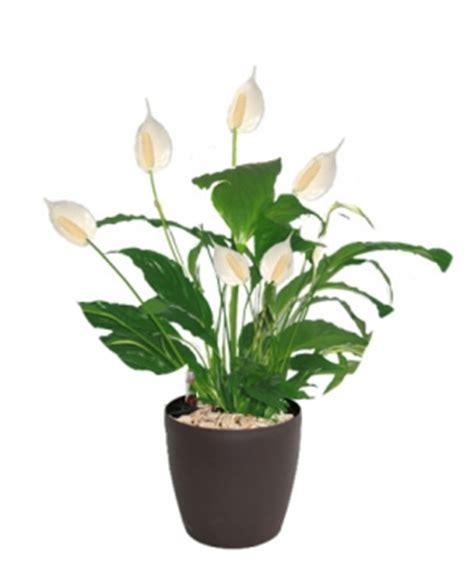 plante pour le bureau les plantes d 233 di 233 es pour la d 233 coration d un bureau