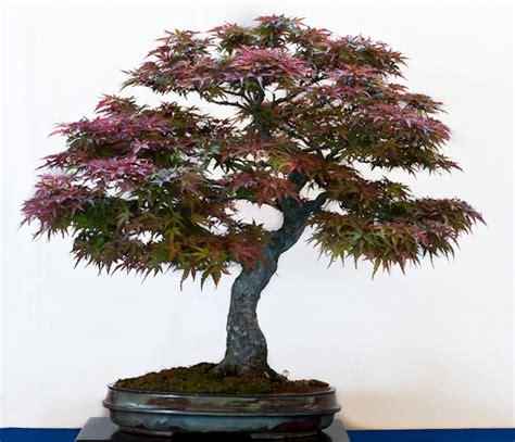 garten bonsai winterfest machen die zehn besten outdoor bonsai f 252 r einsteiger