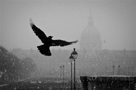The Snow Falling Into My Wings Vol 1 bird flying hawk snow snow falling image 207691 on