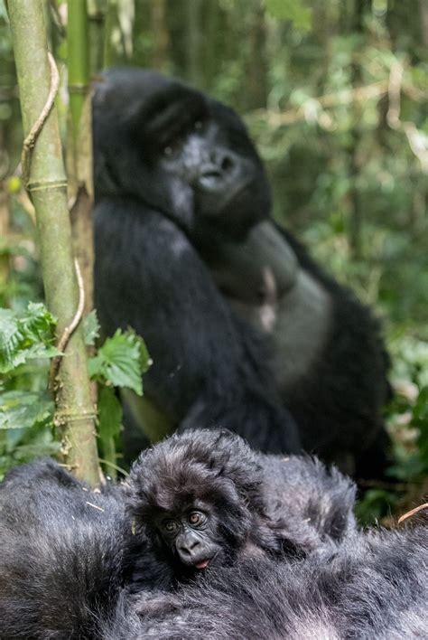 Bebas Dari Konflik Paul Tomlinson inilah beberapa spesies terancam punah akibat ulah manusia