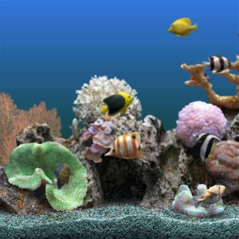 Best Seller Lem Kaca Aquarium 70 Gram blue aquarium promotion shop for promotional blue aquarium on aliexpress