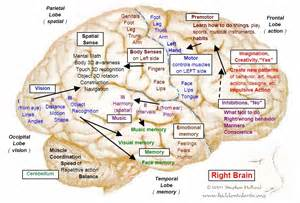 Www chalksmart org 2012 01 parts of brain and major functions html