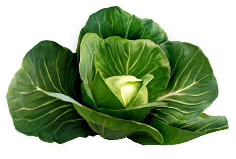vegetables png green vegetable png www pixshark images galleries