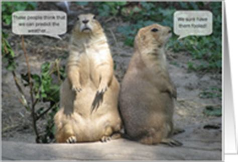 groundhog day jokes pictures groundhog day cards from greeting card universe