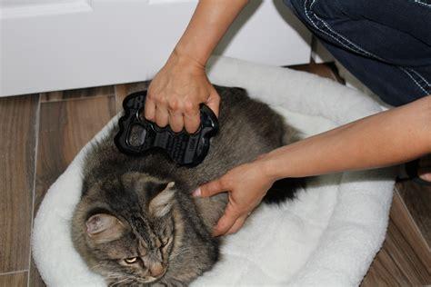 feline bodywork certification