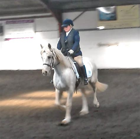 Section D Dressage by Dressage Cob Blodyn Tatws Palomino
