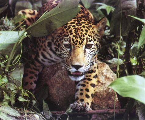 imagenes jaguar you 302 found