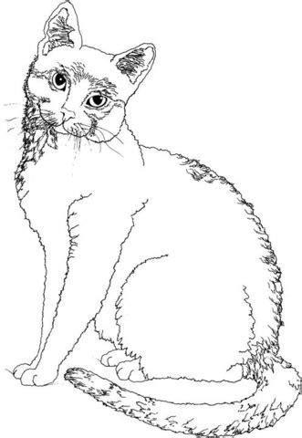 ausmalbild katze schaut sich um kostenlos