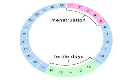 missed menstrual cycles am i pregnant or getting my period big lady sex