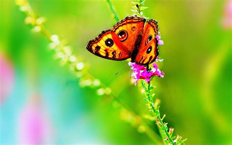 butterflies full hd wallpaper and background image colorful butterfly hd wallpapers real artistic