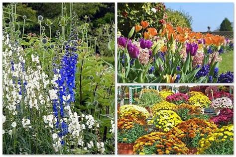 simple flower bed ideas 5 flower bed ideas colorful as a flower shop