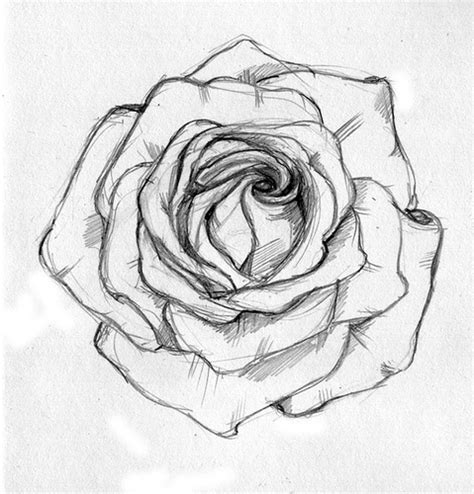 simple rose tattoo drawing rose sketch a friend asked me to sketch out for a tattoo