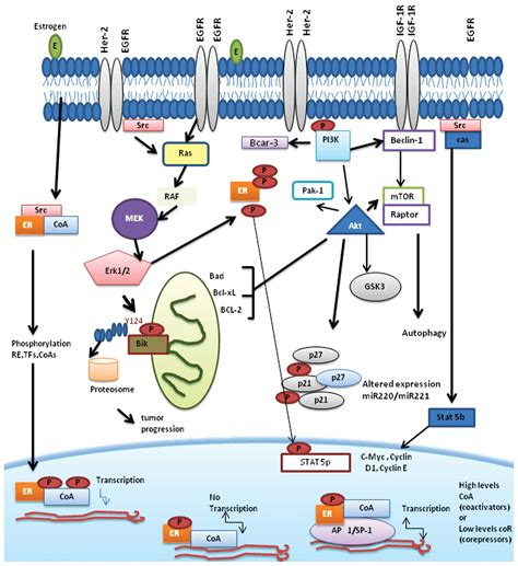 protein 4 1r mechanisms associated with resistance to tamoxifen in